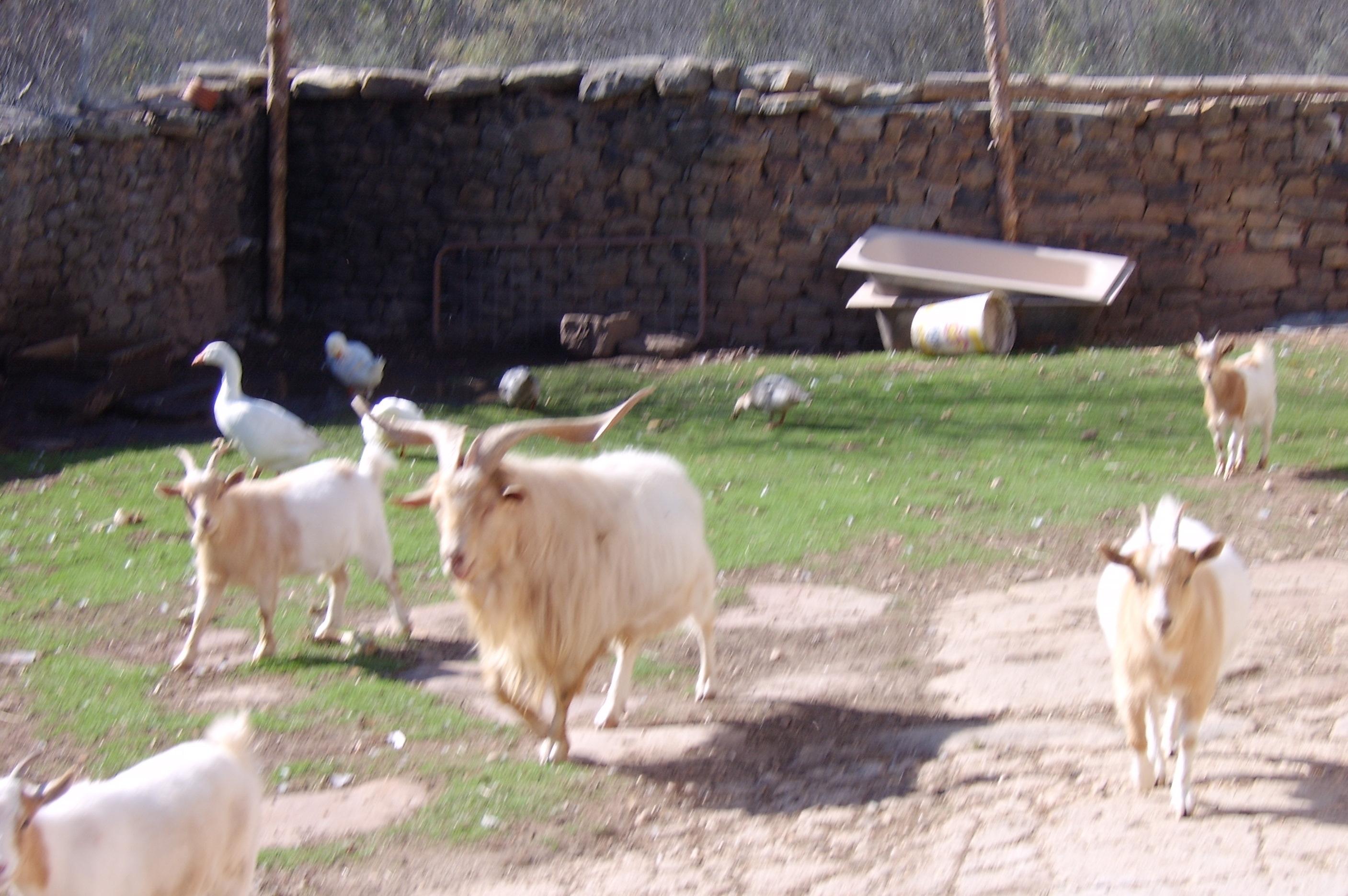 Casa rural la capellan a el royo tierra del valle soria - Casa rural la granja ...