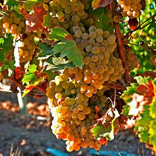La Campiña, humedales, olivos y viñedos a recordar
