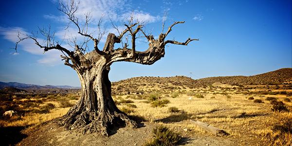 Resultado de imagen de paisaje desértico de almería