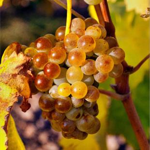 Rioja Alavesa, gratificante ruta enoturista