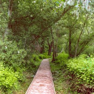 Reserva Natural Sotos de Alfaro junto al Ebro