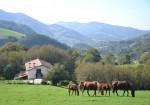 Casa Rural Arriaran