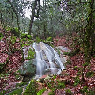 Los Alcornocales, agua por doquier y canutos