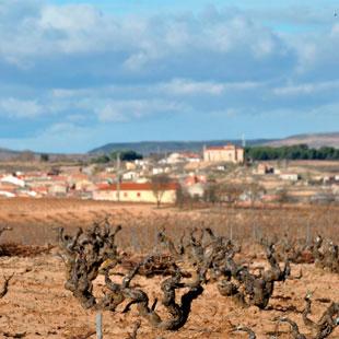 Aranda de Duero y  Ribera vitivinícola del Duero