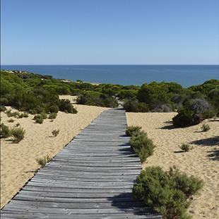 Doñana, el gran humedal europeo paraíso de aves