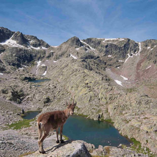 Sierra de Gredos, asombro total en altas cumbres