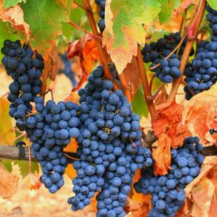Haro y su tierra, enoturismo con sabor a Rioja
