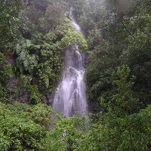 La Gomera, Isla Mágica con bosque prehistórico