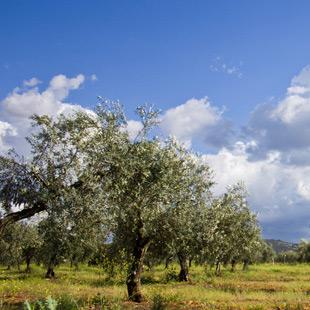 La Jara con su senda de la Vía Verde y montañas