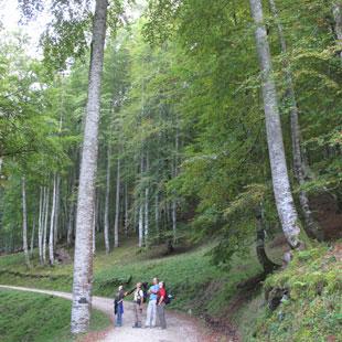 Saja-Besaya, Parque Natural de robles y hayas