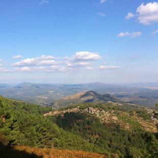 Sierra de San Vicente, jabalíes y águila imperial