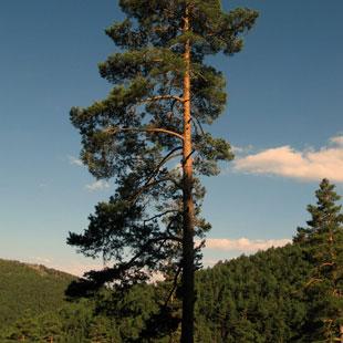 Sierra Norte de Guadarrama en el Parque Nacional