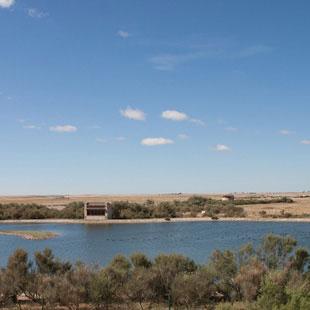 Lagunas de Villafáfila, paraíso de ánsares mil
